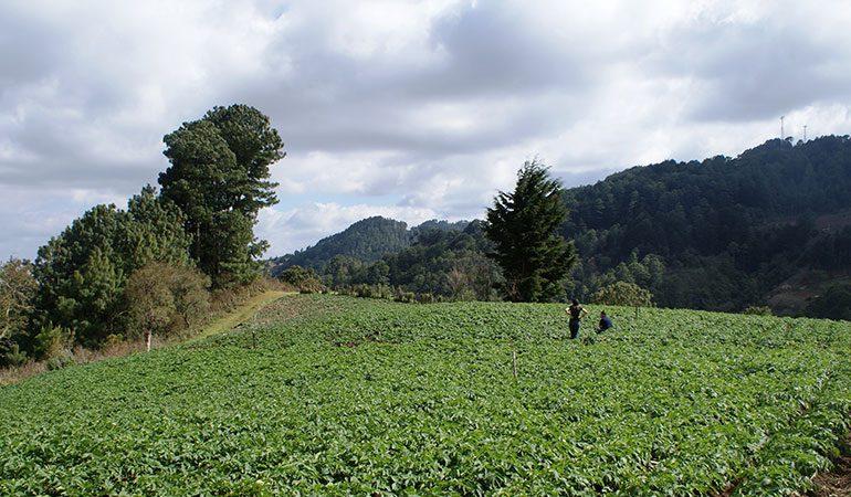 Diferentes sectores se involucran en la revisión del Plan El Salvador Sustentable