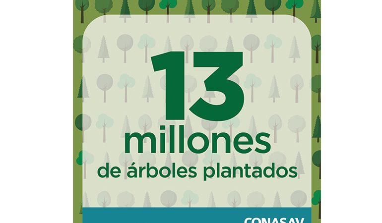 13.7 millones de árboles plantados en campaña masiva de reforestación PLANTATÓN